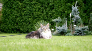 herbe artificielle chat